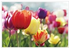お花でHAPPY!0302