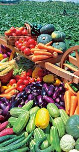 食物繊維0402