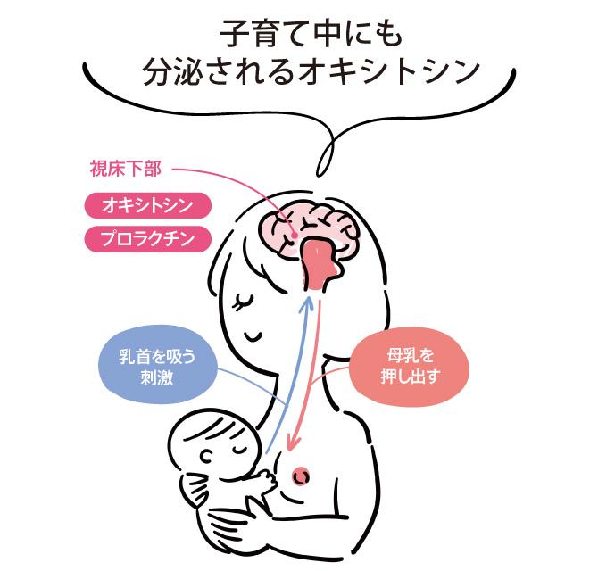 子育て中にも分泌されるオキシトシン