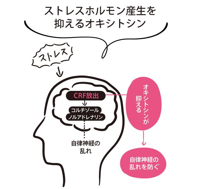 ストレスホルモン産生を抑えるオキシトシン